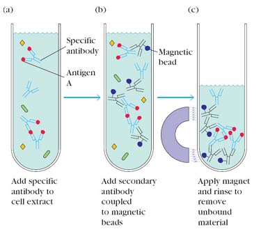 antigen definition and properties