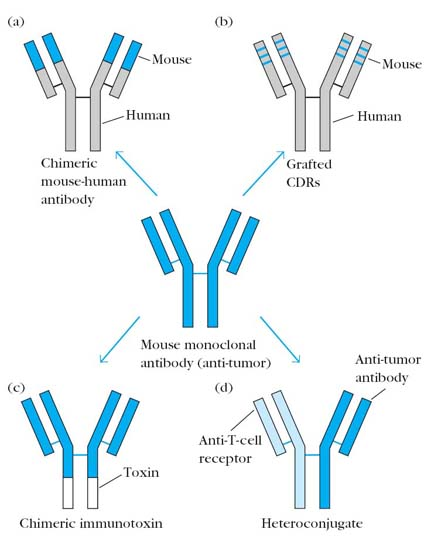 Humanized Antibodies